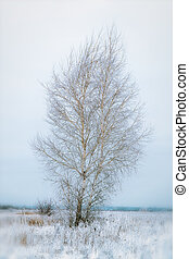 A lonely birch tree in a snow-covered field on cloudy day