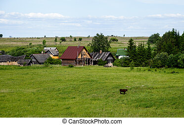 lonely Brown cow on a meadow near the farm