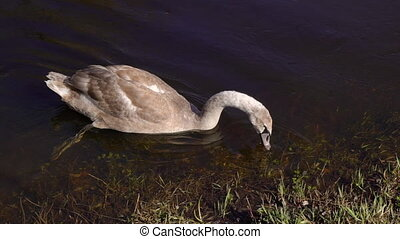 A lonesome duck in a swamp - A scenic shot of a duck in a...