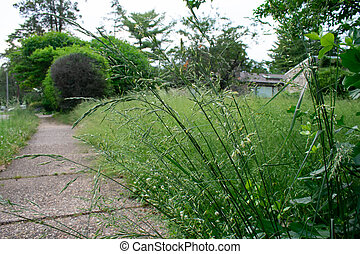 A Long Plant Next to the Sidewalk in an Overgrown Front Lawn