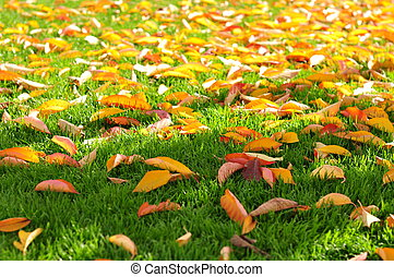 A lot of autumn yellow leaves on green grass. Copy space