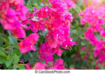 a lot of beautiful, colourful flowers growing in the tropics. exotic, rare flowe