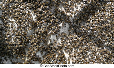 A lot of bees returning to bee hive. Swarm of bees ...