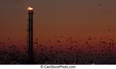 industry at sunset - A lot of birds with the energy industry...