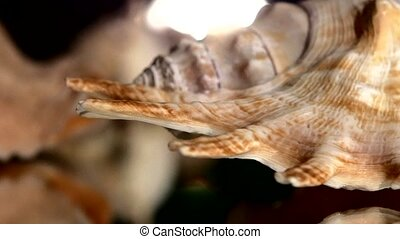A lot of different sea shells on black, rotation, reflection, close up, back light