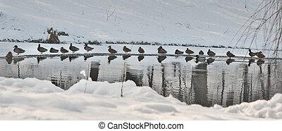A lot of ducks near a small lake