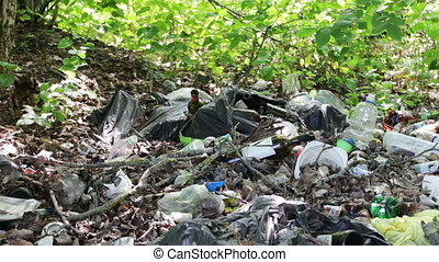 A lot of garbage falls on the ground in the forest. The problem of environmental pollution,