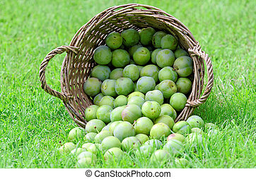 greengage - a lot of greengage in a basket