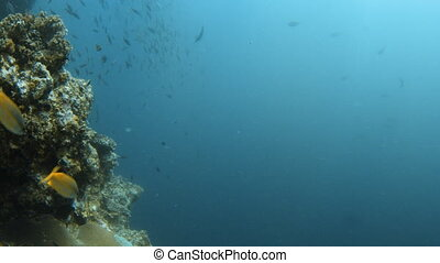 A lot of groups of other fish and coral reef