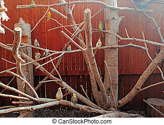 A lot of parrots on tree. Sunny summer day