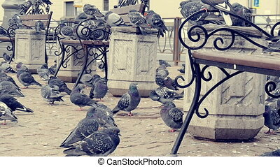 A lot of pigeons taking off from the pavement.