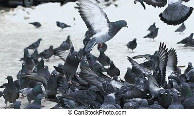 A lot of pigeons taking off from the sidewalk
