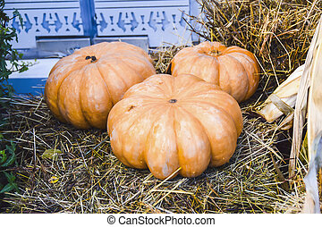 a lot of pumpkins and hay decoration autumn products bright background