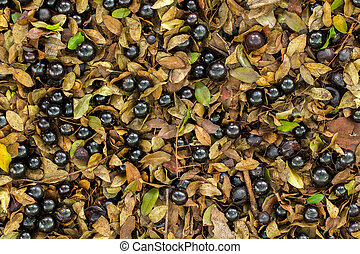 A lot of ripe Jaboticaba fallen in the ground flat lay full-...