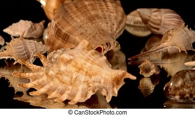 A lot of sea shells on black, rotation, reflection