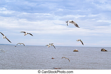 a lot of seagulls over the sea