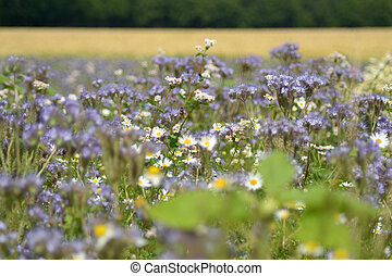 A lot of white and violet flowers in summer sun