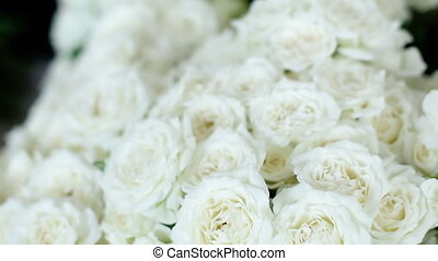 A lot of white roses stand in pots buckets