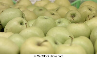 A lot of yellow-green apples - The goods are on a...