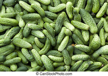 cucumbers - a lot of young cucumbers as background