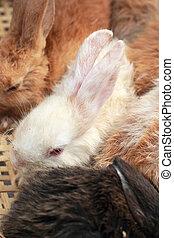 A lot rabbits for sale  - A lot rabbits for sale