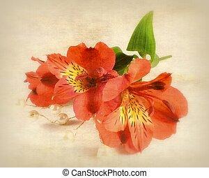 red inkas lily