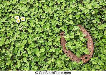 Lucky charm on clover as a background - a Lucky charm on...