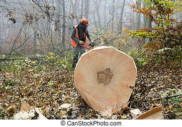 A lumberjack at work.