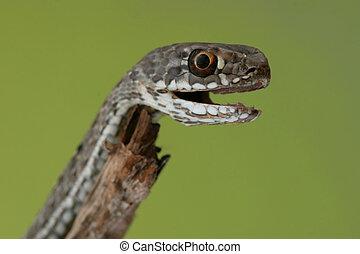 A macro of a snake