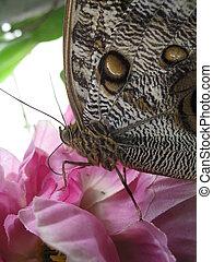 a macro of butterfly