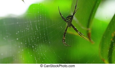 A macro shot of a spider on web - A macro shot of a yellow...