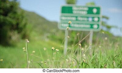 A macro shot of daisies