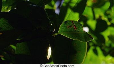 A macro shot of leaf