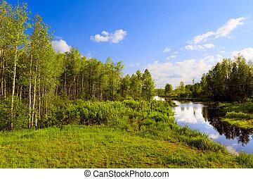 a, madeira, rio, em, um, verão, dia ensolarado