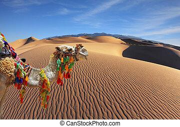 a, magnífico, camelo árabe