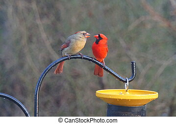 A male and female cardinal standing on a pole next to a bird feeder