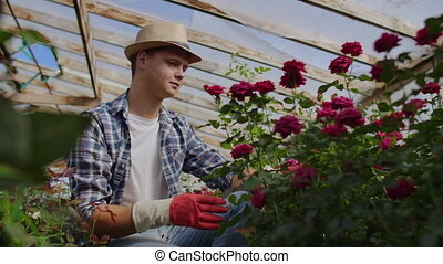 A male gardener florist sits in a greenhouse and examines...