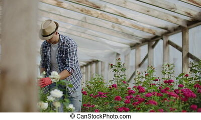 A male gardener is walking through a greenhouse with gloves...