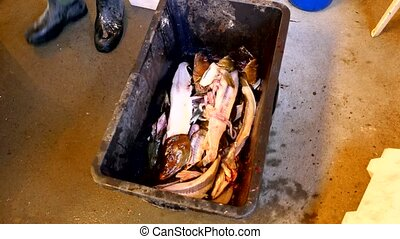 A male hand throws fish skeleton into a black plastic crate....