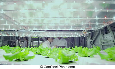 A man and a woman in white coats consider plants growing on...
