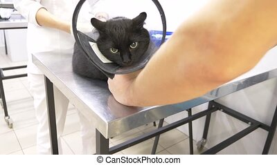 a man brought a cat to a veterinary clinic. Veterinarian...