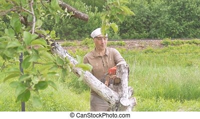 A man cuts a chain saw tree near his house. Green trees in the background. Removing dried branches.