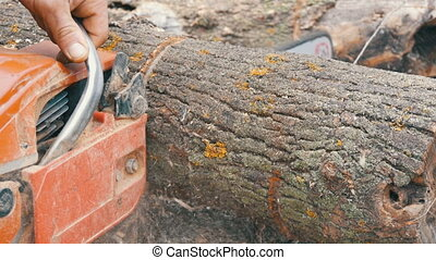 A man cuts dry tree trunks with red chainsaw, sawdust fly...