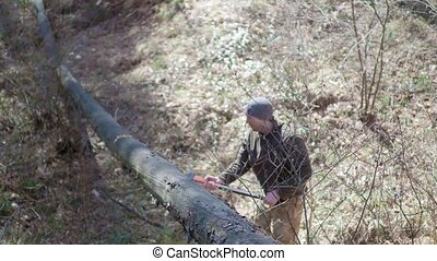 a man cuts with an axe an old tree.