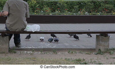 A man feeds pigeons with bread on the street