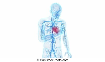 A man having a heart attack - Animation showing a man having...