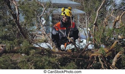 man sawing off a chainsaw branch near a tree