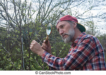 A man inspects apple tree branch in search of vermin