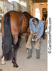 a man is fitting the hoof