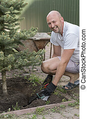 A man is planting a Christmas tree. Man Planting Small Christmas Tree In Silty Soil Ground With Bare Hands And Science Lab Beaker. gardener planting a tree in the garden